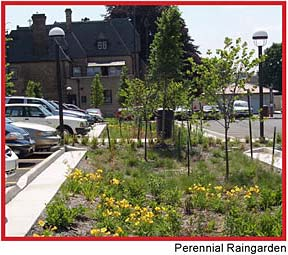 rain-garden-perennials-trees