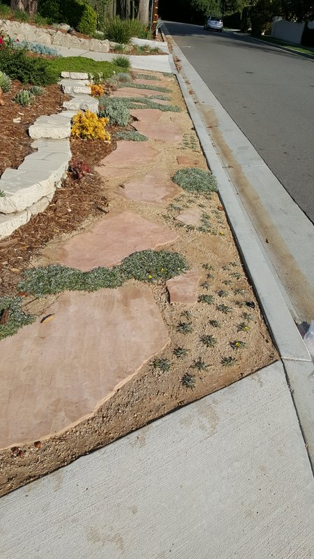 Step 7 Hermosa Decomposed Granite And Additional Plants
