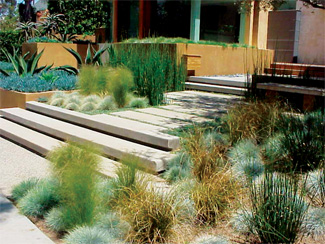 Small Modern Garden Design Plants
